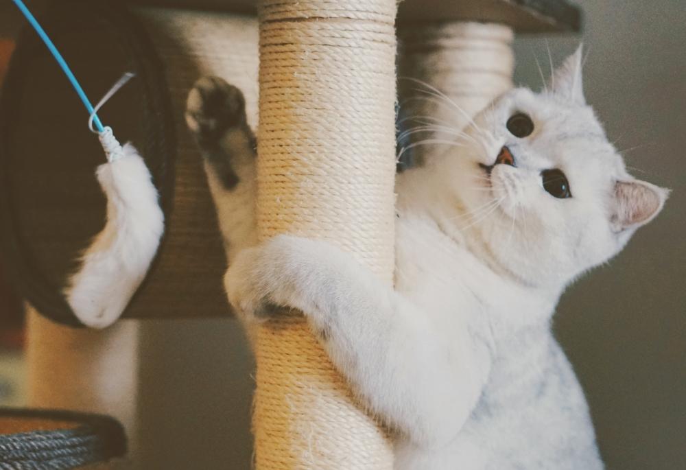 Jeux sur arbre à chat