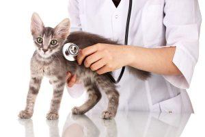 Soigner son Chat chez le vétérinaire