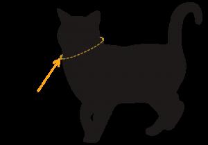tour de cou chat