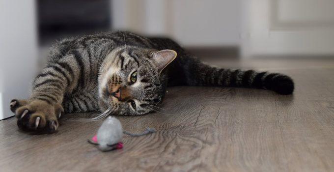 A quoi servent les griffes du chat ?