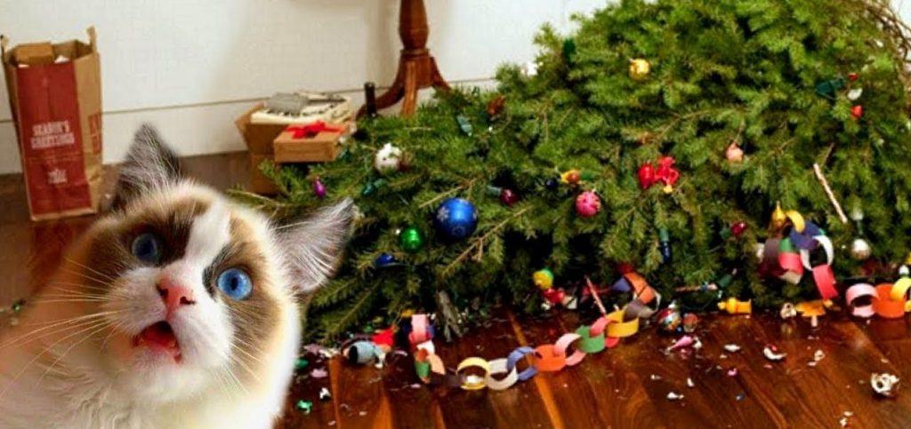 """Résultat de recherche d'images pour """"chat et sapin de noel"""""""