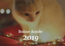 nouvel an du chat 2019