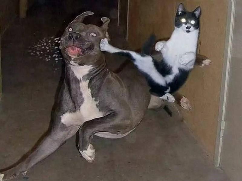 Bagarre chat contre chien