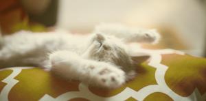 Chaton fait la sieste dans un panier