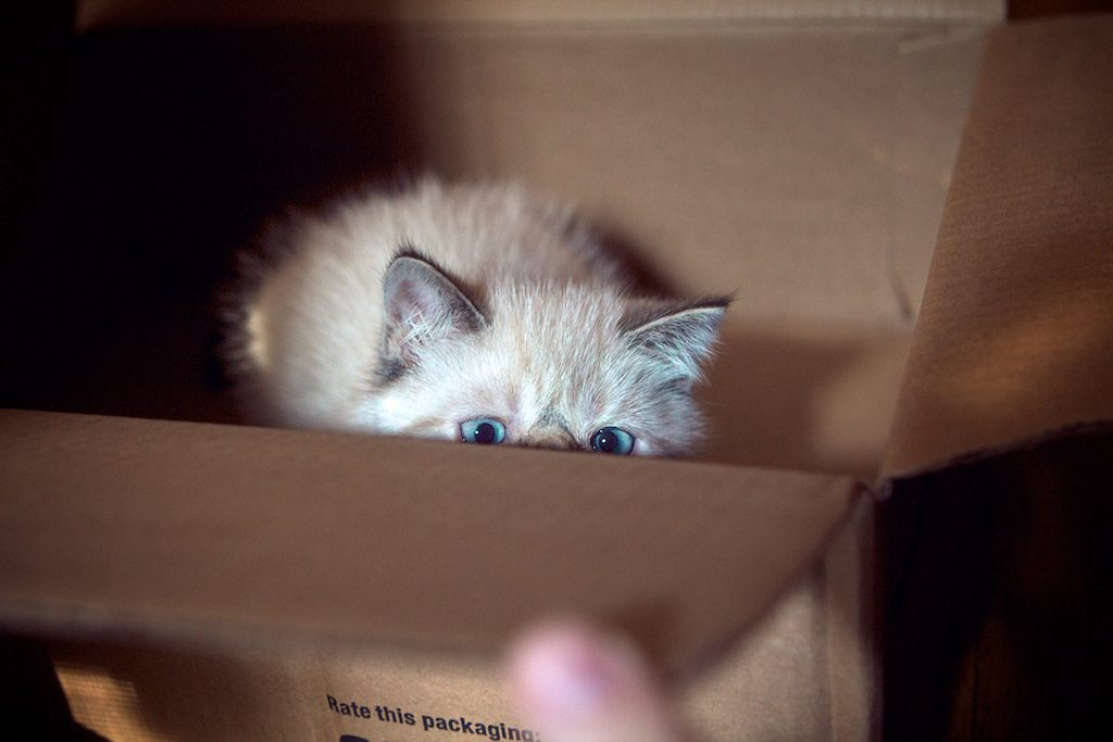 Chaton dans une boite en carton