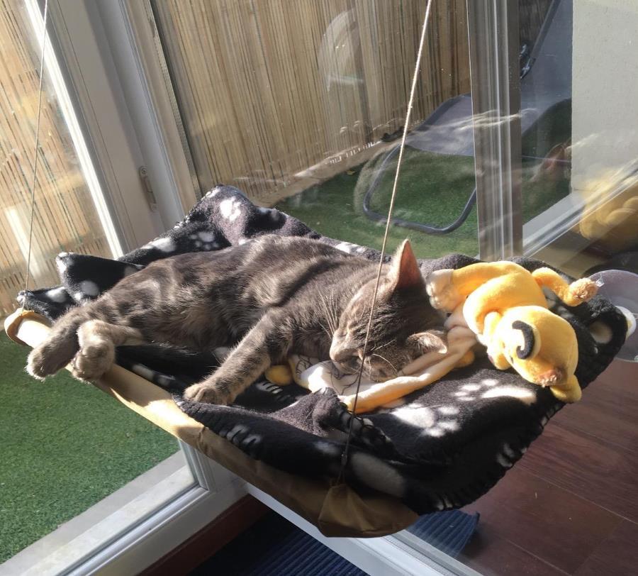 Hamac suspendu pour chat